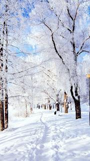 5 fonds d'écran de téléphone : sélection hivernale