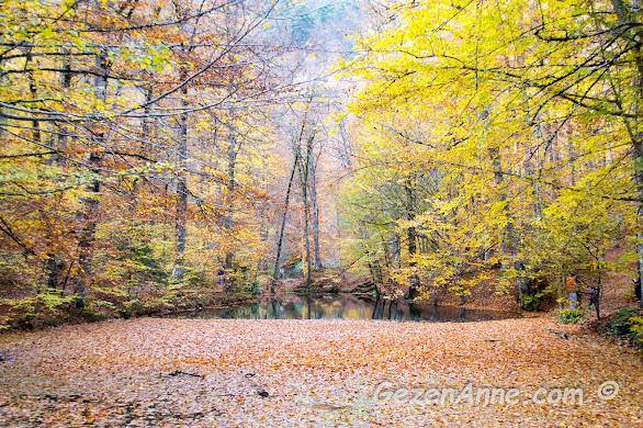 İncegöl ve su yüzeyini kaplamış dökülen yapraklar ile müthiş sonbahar görüntüsü, Yedigöller Milli Parkı Bolu