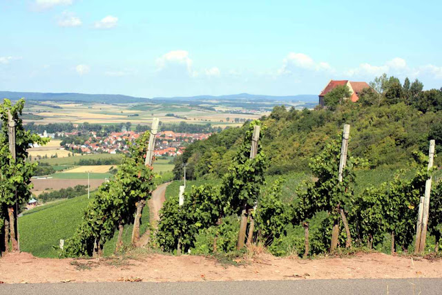 Der Weinberg oberhalb von Ipsheim bei der Burg Hoheneck © Copyright Monika Fuchs, TravelWorldOnline