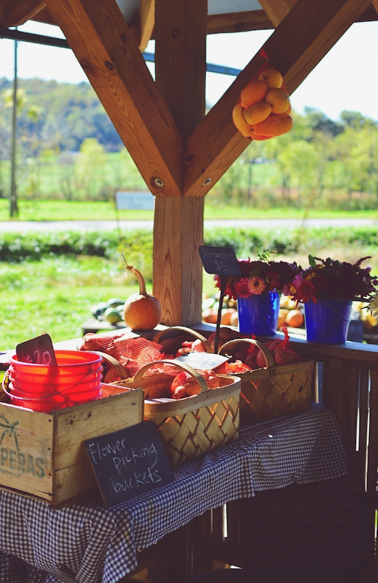 North Carolina Country Side Vendors