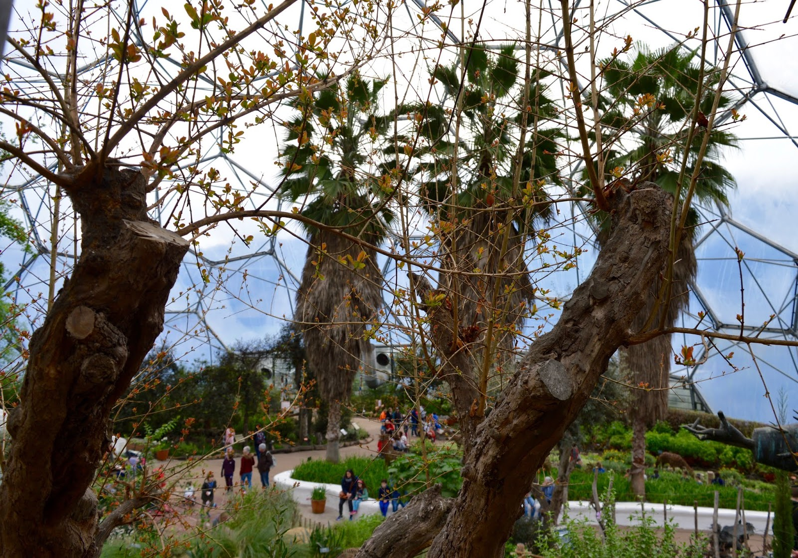 10 Reasons to Visit the Eden Project in Winter  - Mediterranean flowers