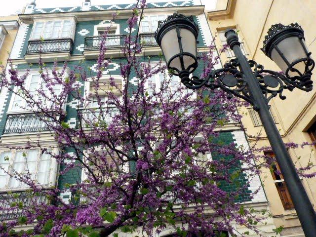 Edificios y árboles del pópulo