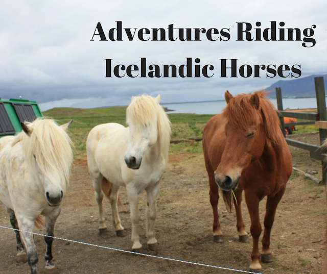 Adventures Riding Icelandic Horses