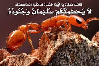 قصص القرأن للأطفال قصة نملة سيدنا سليمان عليه السلام