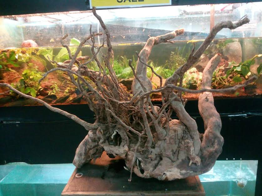 Joe 39 s aquaworld for exotic fishes mumbai india 9833898901 for Aquarium decoration for sale