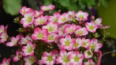 Flores para que esta primavera no tenga ninguna esquina rota