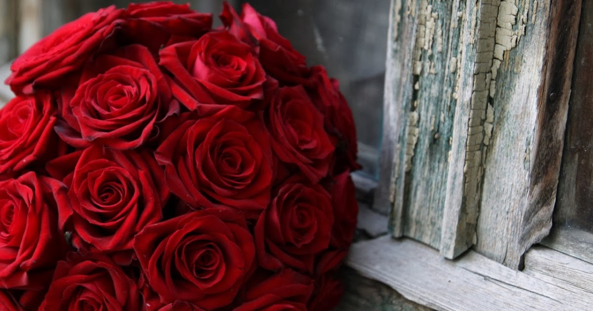 صور خلفيات ورد جوري احمر 2019 وابيض طبيعي Beautiful Red Rose Flowers