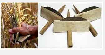 ada banyak sekali jenis alat maupun cara memetik Alat Perontok Padi Tradisional, Manual, Sederhana, Semi Modern, Mesin, dan Modern