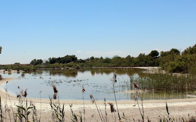 Laguna Raco de la Olla en la Albufera-Valencia