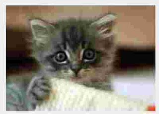 Download suara kucing Lucu Meong terbaru MP3
