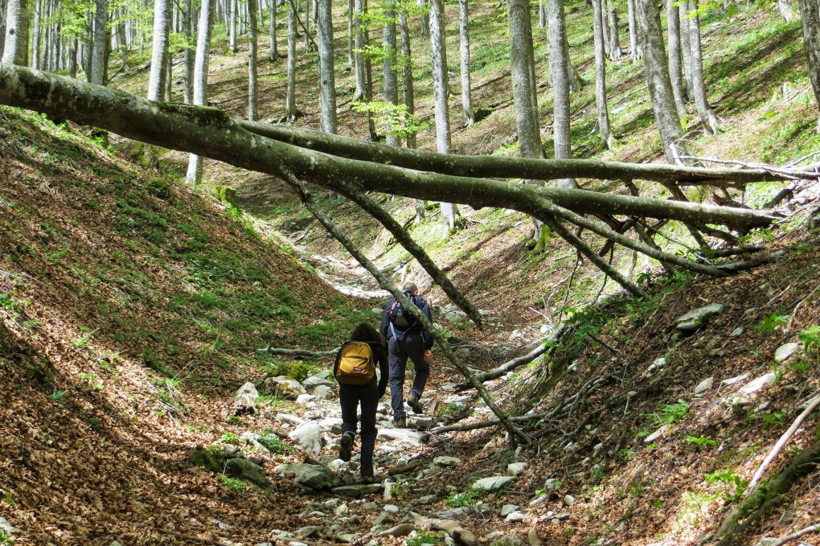 escursione sul cansiglio a malga mezzomiglio