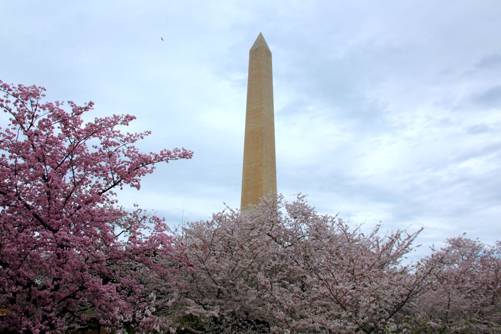 Travel Notes: Cherry Blossom Festival in Washington, DC