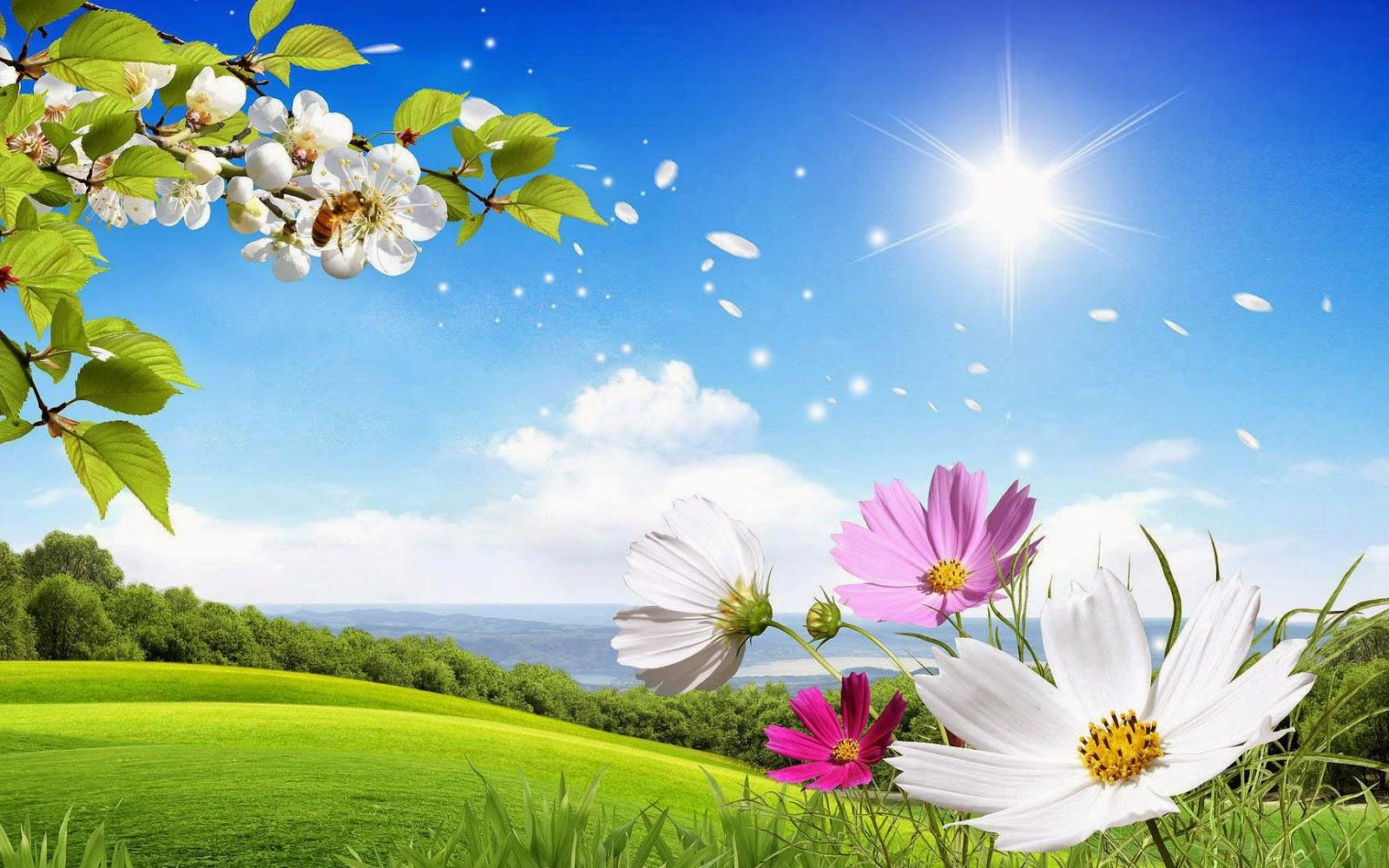 Blauwe lucht, zon, weiland met bloemen