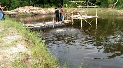 Desa Sukorayahu Labuhan Maringgai Canangkan 100 Kolam Budidaya Ikan Air Tawar dan Udang Vaname