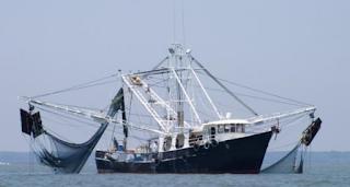 Kata trawl sendiri mempunyai dua arti yang pertama dari perancis dan inggris Kabar Terbaru- ALAT BANTU PENANGKAPAN TRAWLER