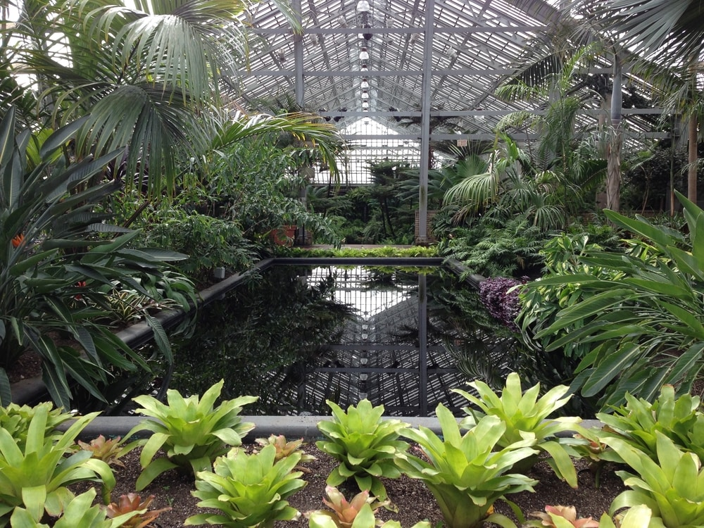 One of the display houses in Garfield Park Conservatory with lots of tropical plants and a big rectangle black pool