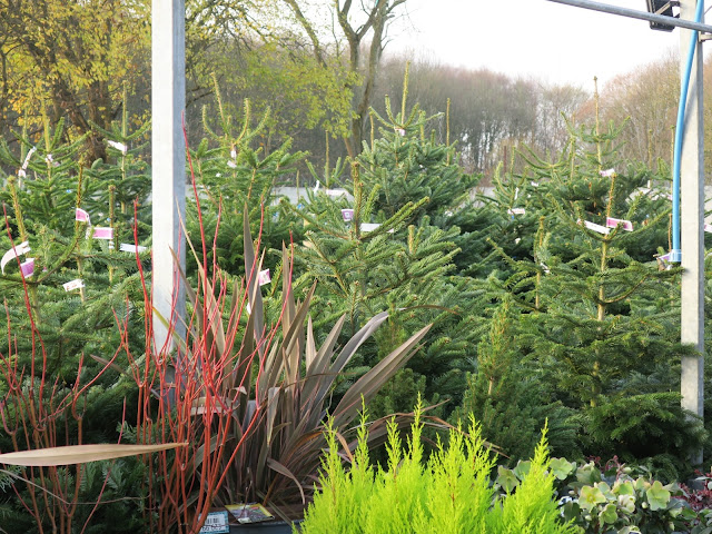 Garden centre scene: plants under shelter, woodland beyond, Christmas trees between.
