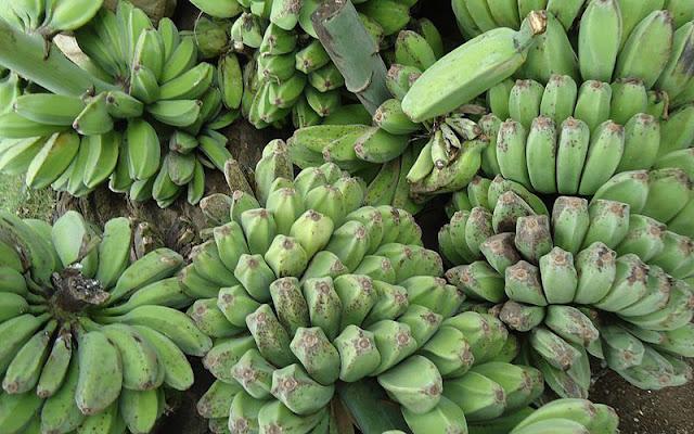 Cardava Banana