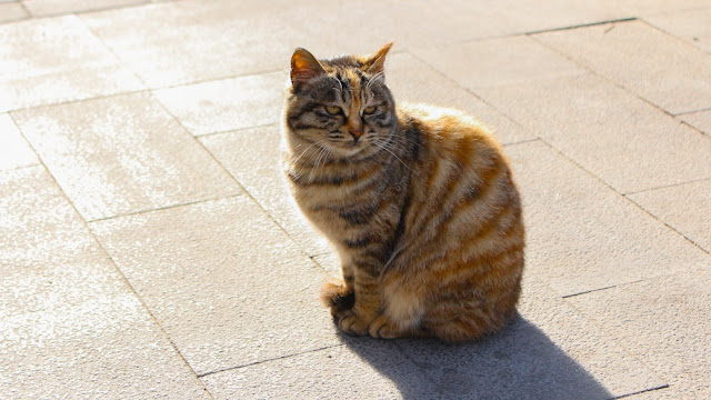 kucing di mutianyu
