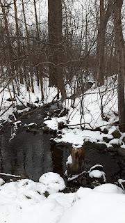Bois-de-Liesse l'hiver, ruisseau, forêt