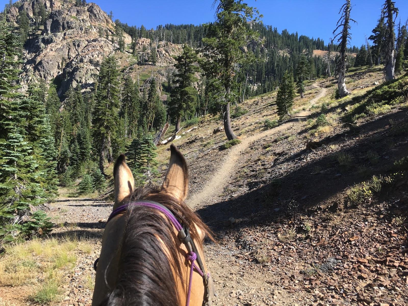 Ponyhill: 2016