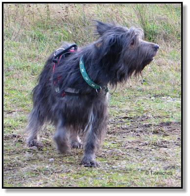 ein alter Hund voller Freude und Lebensmut
