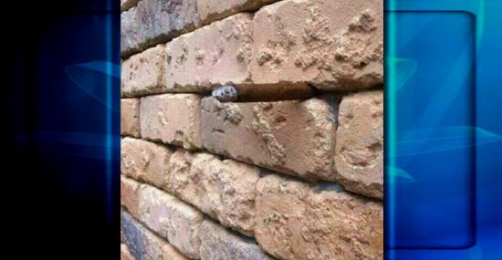 O que você vê nessa imagem? Estranha ilusão de ótica viraliza na internet