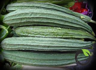 Mengenal sayuran Oyong/emes