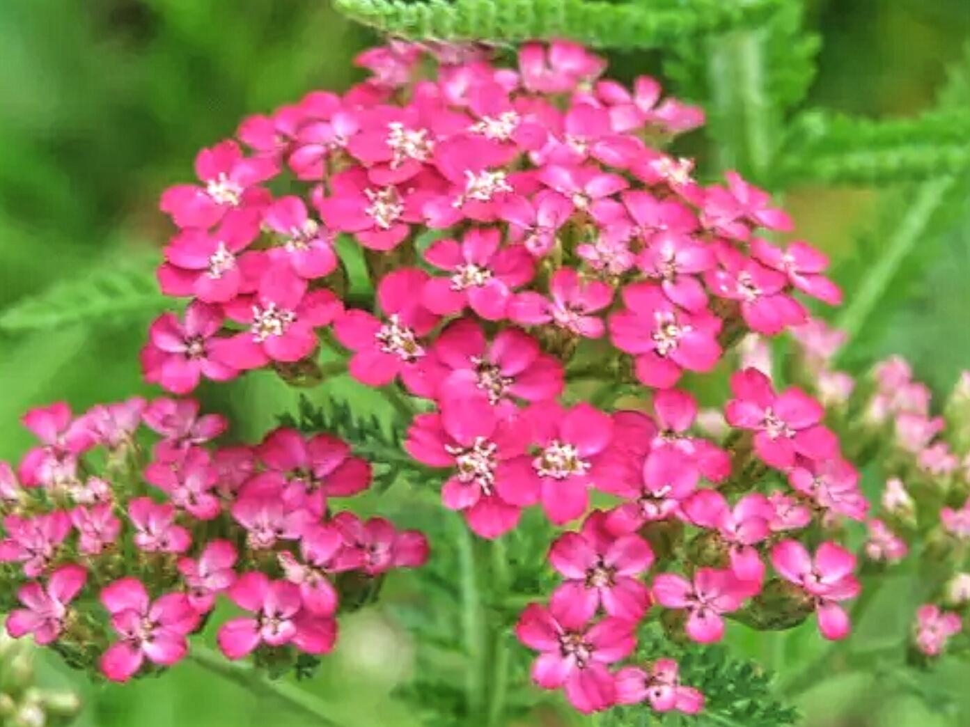 #Lovely-Wanko-blog: 11月17日の誕生花