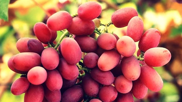Obat Kanker Usus, Anggur Merah