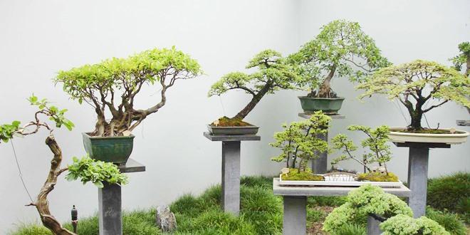 Como fazer bonsai passo a passo eco vida bom despacho for Como cultivar bonsais