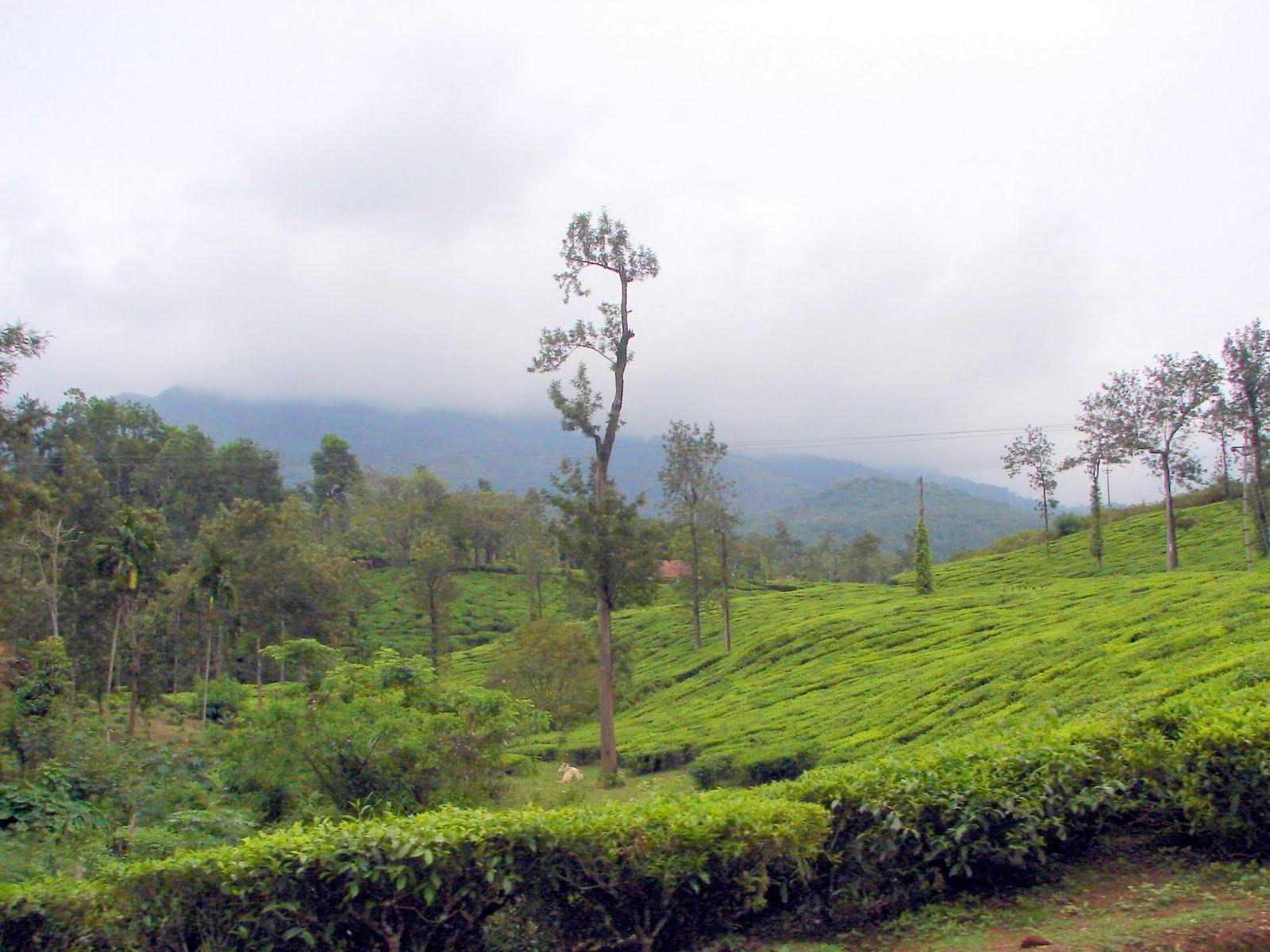 Lakkidi Hill Station, Kerala