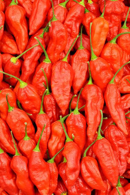 Bhut Jolokia chili množica