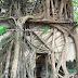 Wat Bang Kung - Temple within Tree