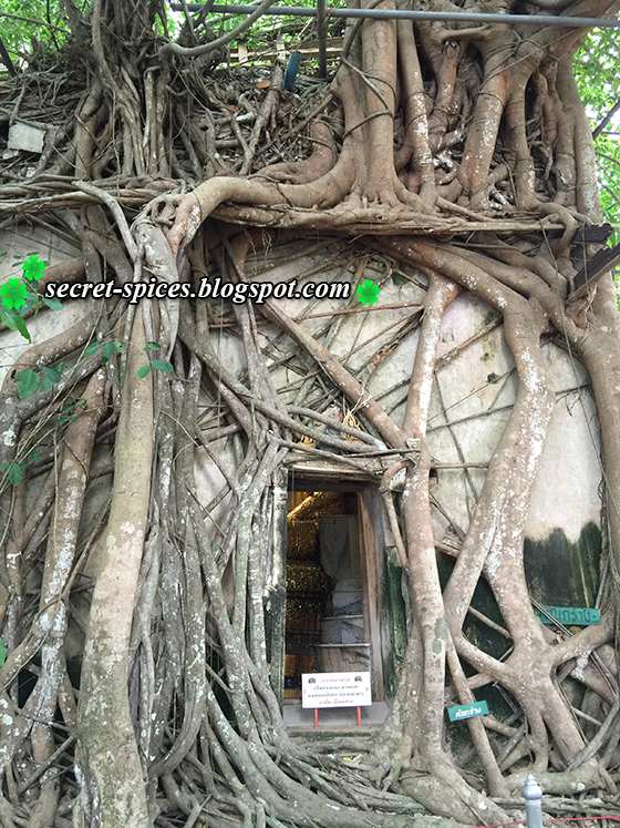 Wat Bang Kung - Temple within Tree