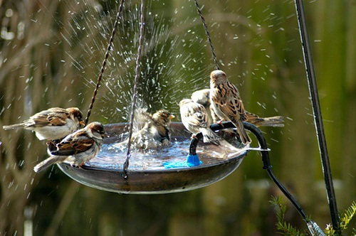 купальня-поилка для птиц