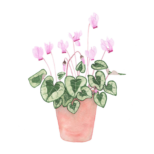 watercolor paintings, houseplant portraits, cyclamen plants, watercolor cyclamen, watercolor houseplant, Pink cyclamen painting, Anne Butera, My Giant Strawberry