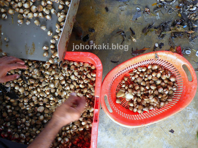 Where-do-Cockles-Come-from-Discover-Selangor-Heart-of-Malaysia