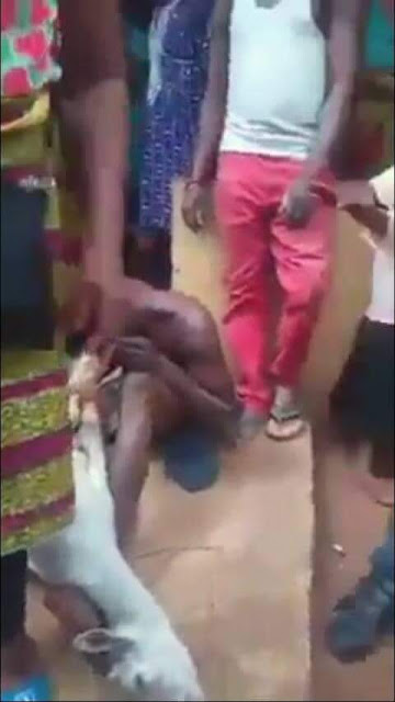 Photos: Man caught having sex with pregnant goat in Edo State