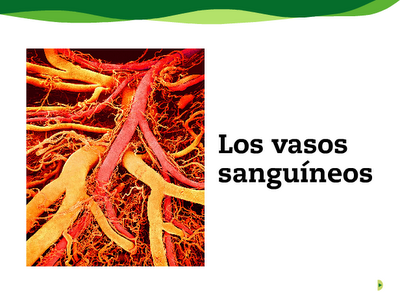 http://www.e-vocacion.es/resources/biblioteca/html/143315/recursos/la/U02/pages/recursos/143315_P24.html