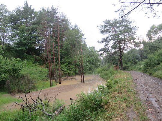 Dolina rzeki Biała.
