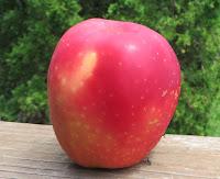 Breeze apple