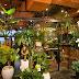 Tokyo Cafes: Aoyama Flower Market Tea House