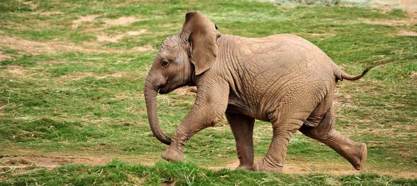 21 Cute baby elephant pictures | Amazing Creatures