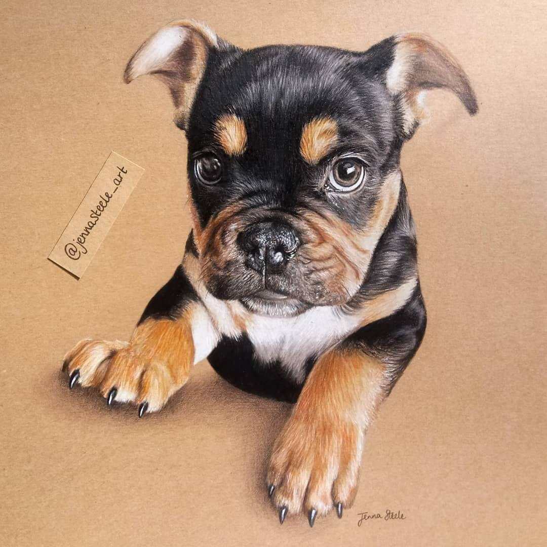 07-Pet-Portrait-Jenna-Steele-Collection-of-Pencil-Drawings-www-designstack-co