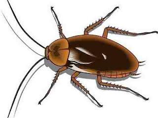 sapne mein cockroach dekhna सपने में कॉकरोच देखने से क्या होता है