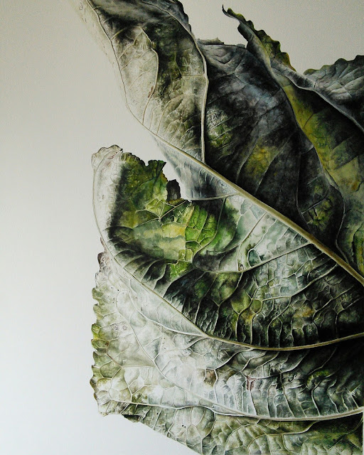 botanical painting of a Poplar leaf (Populus nigra)