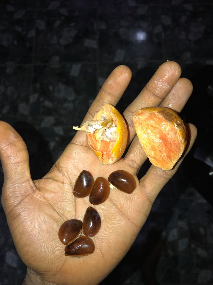 What is the English Name of This Fruit