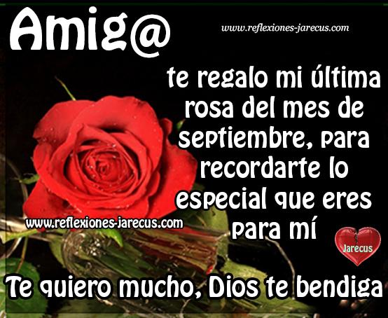 Amig@ te regalo mi ultima rosa del mes de septiembre, para recordarte lo especial que eres para mí. Te quiero mucho, Dios te bendiga.