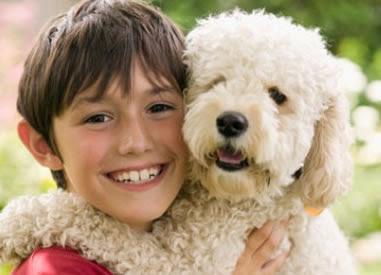 Derechos de los perros